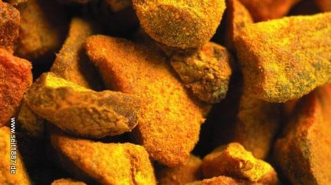 Curcuma Longa goldene Heilpflanze Indiens