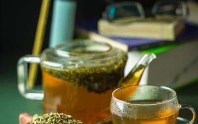 Salbeigamander Teucrium scorodonia gehört zu den antiviral wirkenden Heilpflanzen